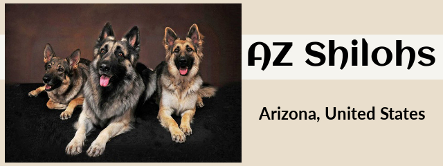 Issa Shiloh Shepherd Breeders Puppies