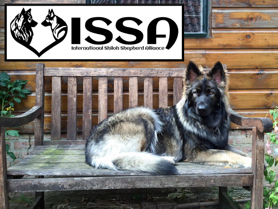 Welcome to the International Shiloh Shepherd Alliance!